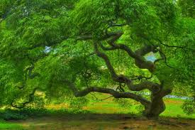 green tree, hug trees